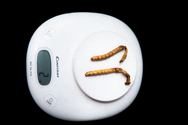 Weight of Cordyceps Incensis